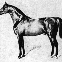 Les races de chevaux allemands